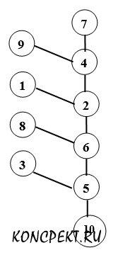 Филогенетический ряд человекообразных обезьян