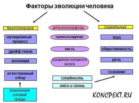 Факторы эволюции человека