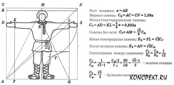 Пропорции человеческого тела: деление пополам, золотое сечение, функция золотого сечения