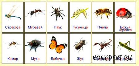 Изображения насекомых