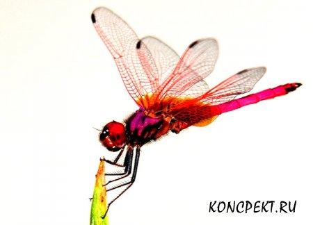 Картинка стрекозы