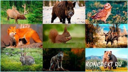 Животные обитающие в российских лесах