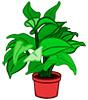 Загадки о комнатных растениях