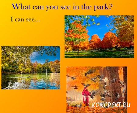 What can we see in the park?