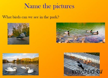 What birds can we see in the park?