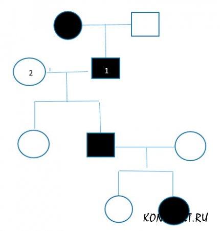 Рисунок родословной