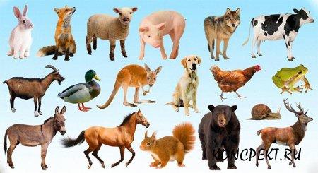 Картинки диких и домашних животных
