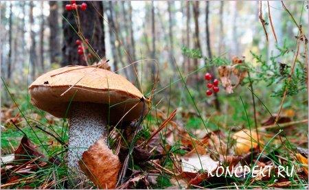 Дары осеннего леса