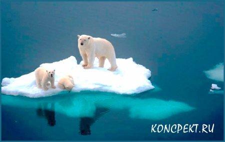 Белые медведи на льдине