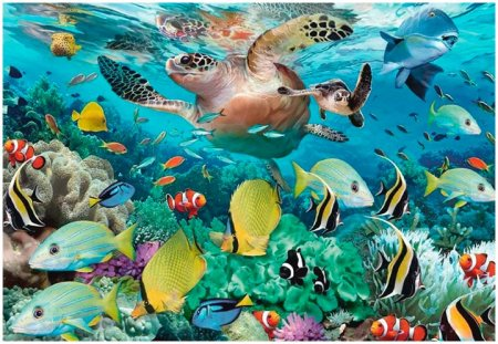 Морские обитатели