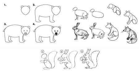 Образцы поэтапного рисования диких животных