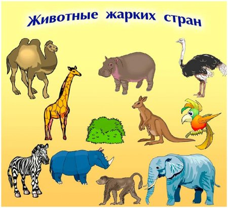Животные жарких стран