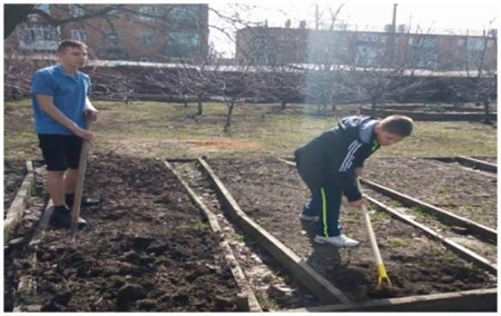 Дети посадили овощные культуры
