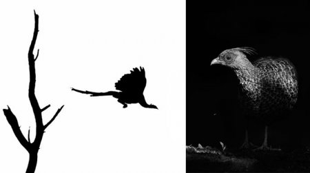 Контраст изображений