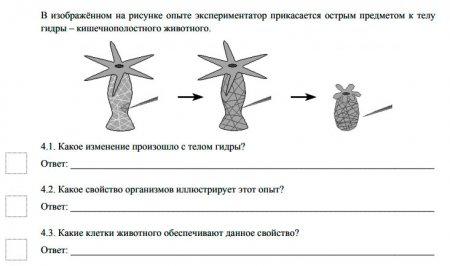 Задание из ВПР по биологии