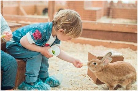Дети кормят кролика