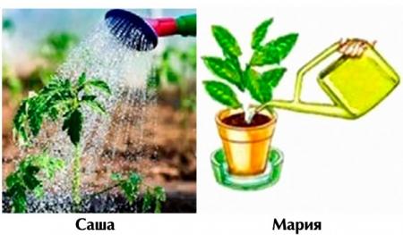 Кто правильно поливает растения?