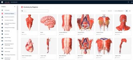 Вкладка анатомия