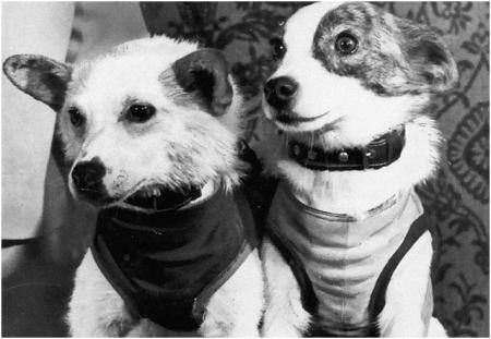 """Собаки """"Белка и Стрелка"""""""