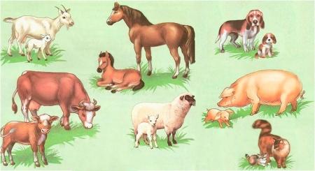 Домашние животные и их детеными