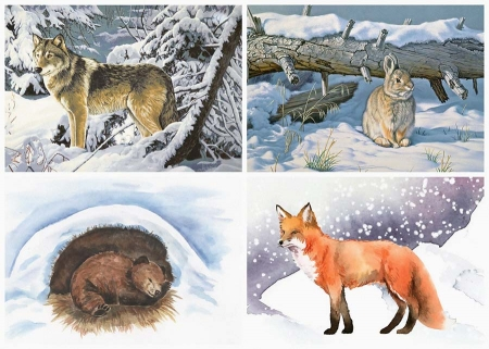 Как зимуют звери