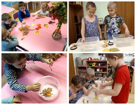 Дети проводят опыты с листьями