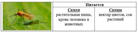 """Карточка """"Питание комаров"""""""